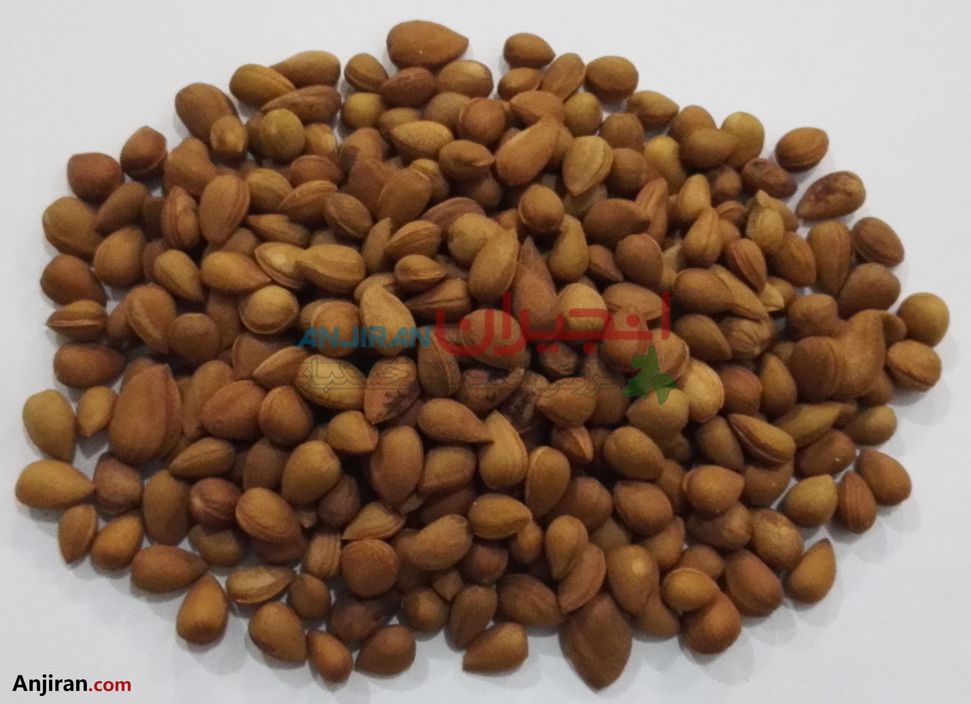 بادام کوهی تلخ - Almond