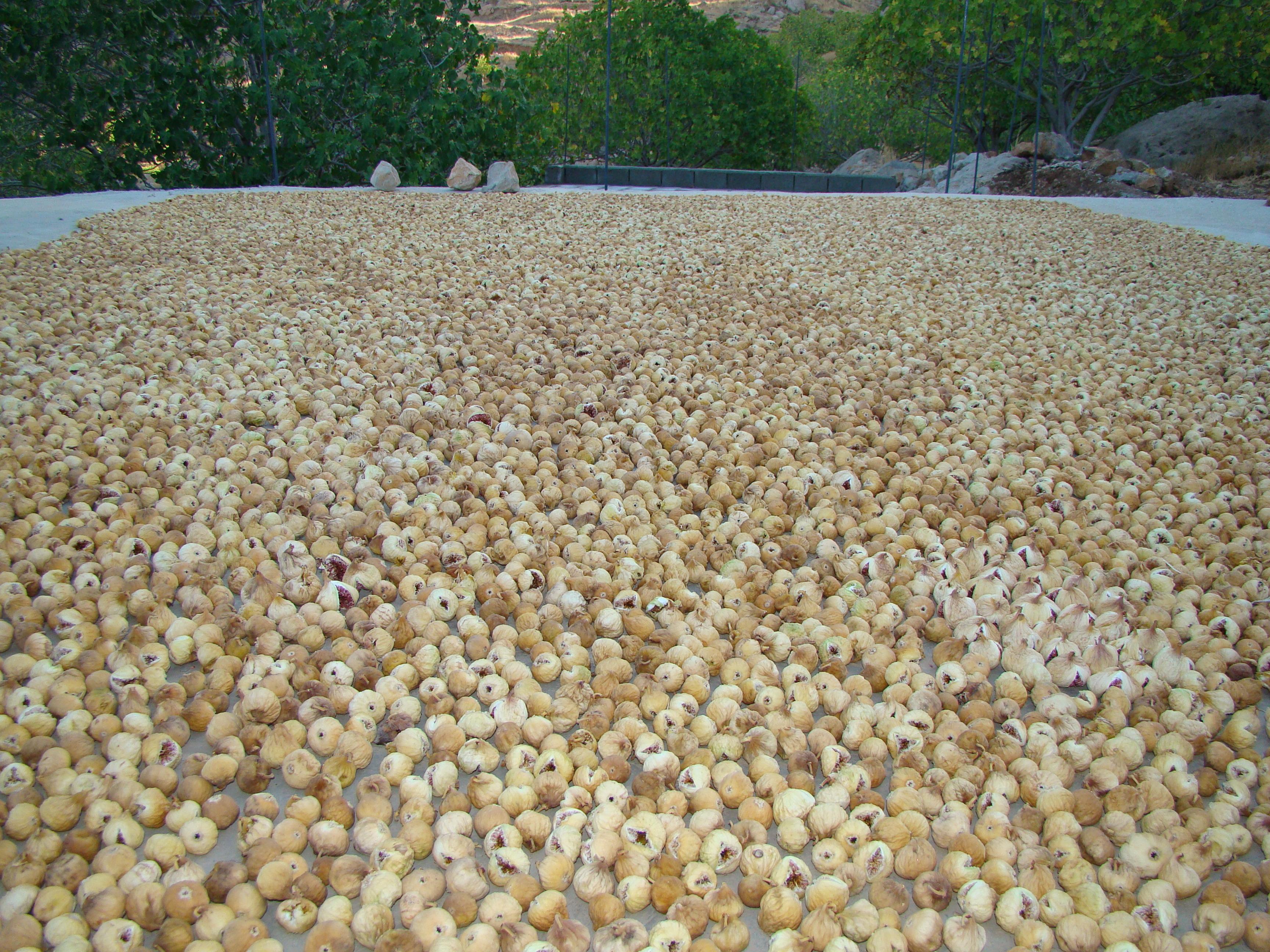 خشک کردن انجیر - Drying figs